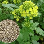 Как прорастить любые семена со всхожестью 100%. Лучший способ проращивания.